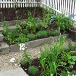 Terraced vegetable garden with bluestone risers