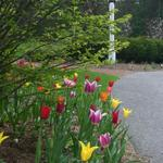 Spring bulbs add color to landscape